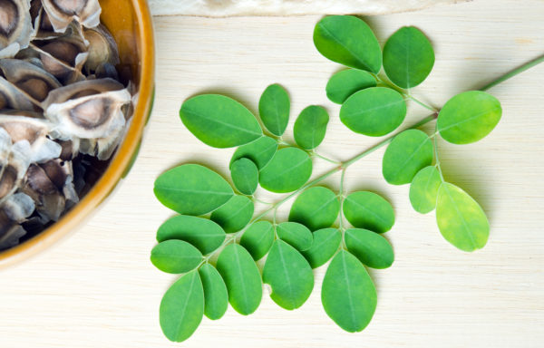 Moringa Oleifera - Der Baum der Wunder