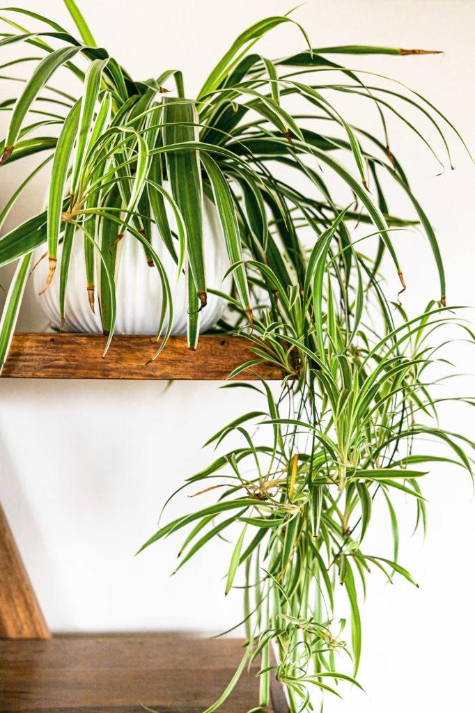 Melanie Wenzel Blog Beste Zimmerpflanzen Saubere Luft Grünlilie