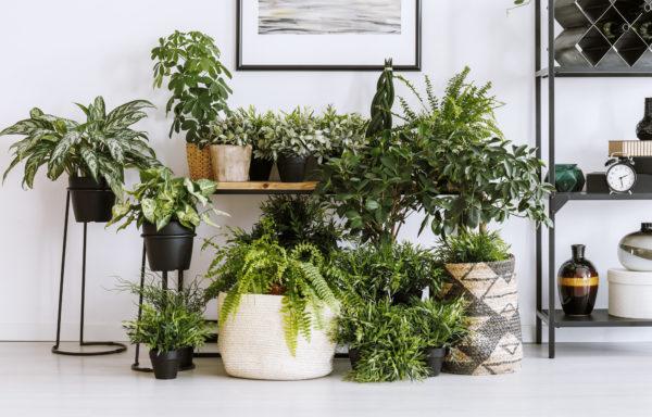 Die 5 besten Zimmerpflanzen für saubere Luft
